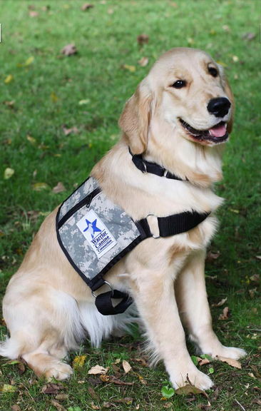 How Are Dogs Trained To Be Service Dogs