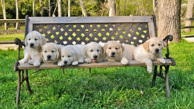 Valor Litter Bench Shot